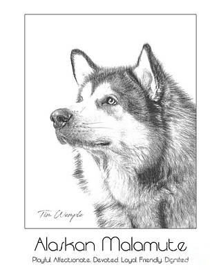 Digital Art - Breed Poster Alaskan Malamute by Tim Wemple