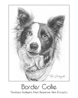 Border Collie Digital Art - Breed Poster Border Collie by Tim Wemple