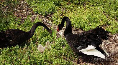 Photograph - Breeding Pair by Cassandra Buckley