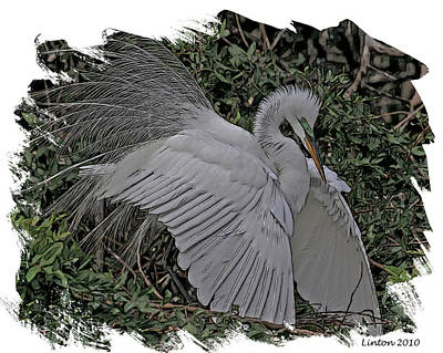 Egret Digital Art - Breeding Plumage by Larry Linton