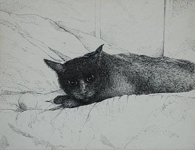 Drawing - Breen by Caroline Krieger Comings