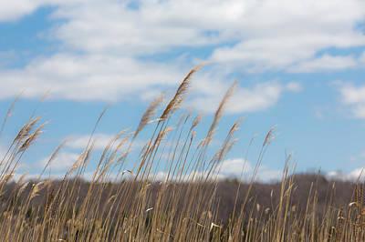 Photograph - Breeze by Sara Hudock
