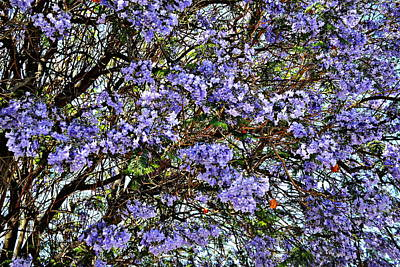 Photograph - Breeze Through The Jacaranda by Glenn McCarthy Art and Photography