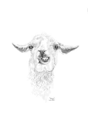 Llama Wall Art - Drawing - Brian by K Llamas