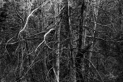 Photograph - Briar Forest by Jim Vance