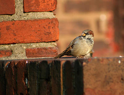 Brick And Bird Art Print by Jason Hochman