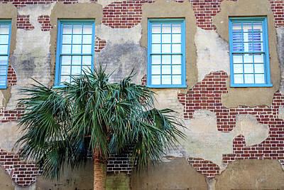 Photograph - Brick Wall And Palmeto by Menachem Ganon