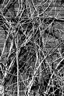 Photograph - Brick Wall And Vines Bw High Contrast by Mary Bedy