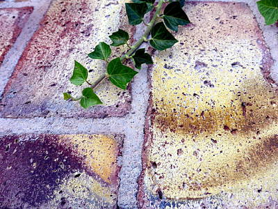 Photograph - Bricks And Ivy by Marlene Rose Besso