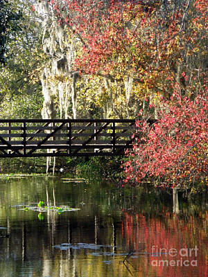 Photograph - Bridge At Sawgrass Lake Park by Rose  Hill