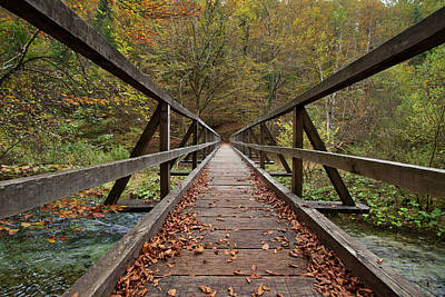 Photograph - Bridge by Davor Zerjav