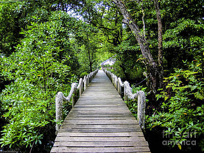 Kosrae Island Photograph - Bridge In Kosrae by Dan Norton