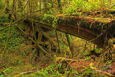 Photograph - Bridge In The Rainforest by Adam Jewell