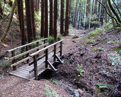 Bridge In The Redwoods Art Print