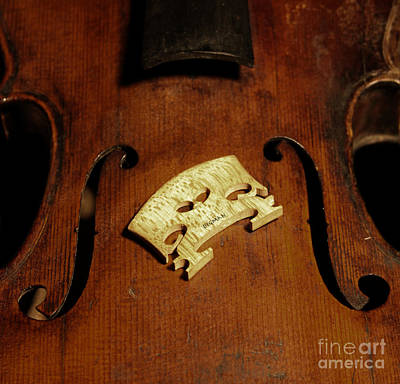Violin Photograph - Bridge In Waiting  by Steven Digman