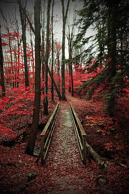 Photograph - Bridge Through Autumn Forest by Brooke T Ryan