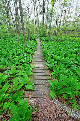 Photograph - Bridge Through Skunk Cabbage by David Arment