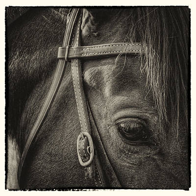 Horse Bridle Photograph - Bridled II by David Patterson
