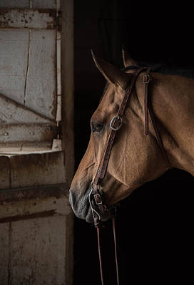 Photograph - Bridled by Ryan Courson