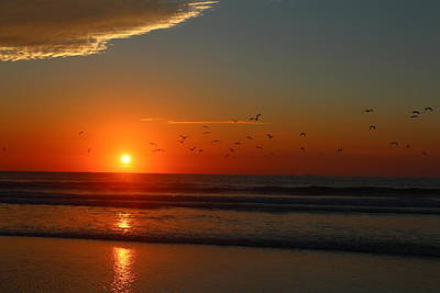 Photograph - Brids At Sunrise On Vilano Beach by Sean Sowell