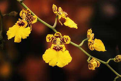 Floral Photograph - Bright And Beautiful Orchids by Tom Mc Nemar