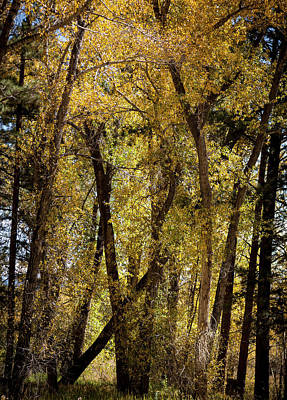 Photograph - Bright Aspen Lights by Marilyn Hunt