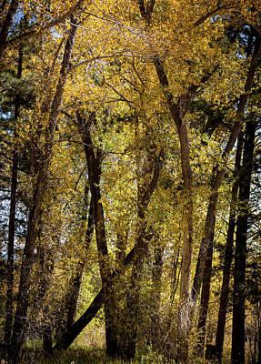 Photograph - Bright Aspen Lights by Marilyn Hunt