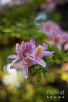 Dahlia Photograph - Bright Azaleas Vibrant Colors by Mike Reid