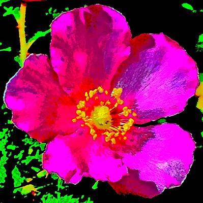Food And Flowers Still Life - Bright Baja Rose by Scott L Holtslander