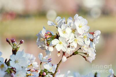 Photograph - Bright Blossoms by Karen Jorstad