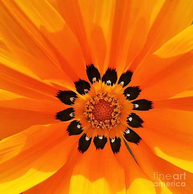 Photograph - Bright Day By Nature by Jasna Gopic