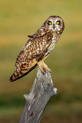 Bright-eyed Owl Art Print