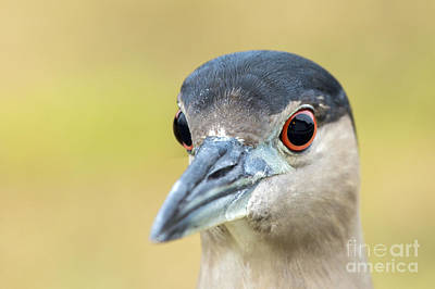Photograph - Bright Eyes by Karin Pinkham