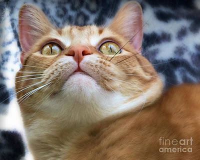 Photograph - Bright Eyes by Kathy M Krause