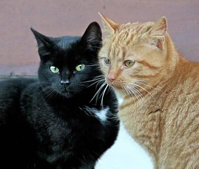 Ginger Cat Photograph - Bright Eyes by Odd Jeppesen