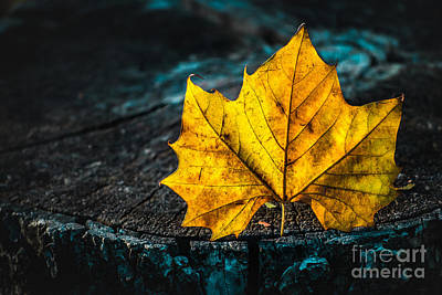 Photograph - Bright Fall In The Woodland by Michael Arend