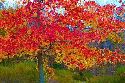 Photograph - Bright Fall Maple by Polly Castor