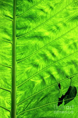 Bright Green Leave With An Insect Crawling Over Its Surface Art Print by Sami Sarkis