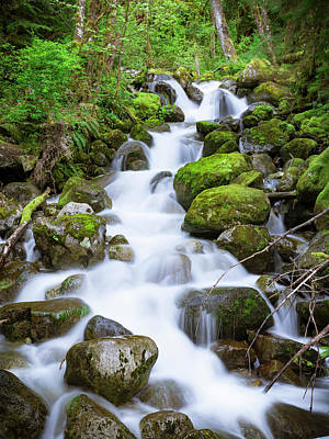 Photograph - Bright Green Mossy Forest With Flowing Stream Water by Open Range