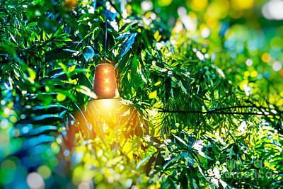 Photograph - Bright Lantern Among Green Foliage by Anna Om