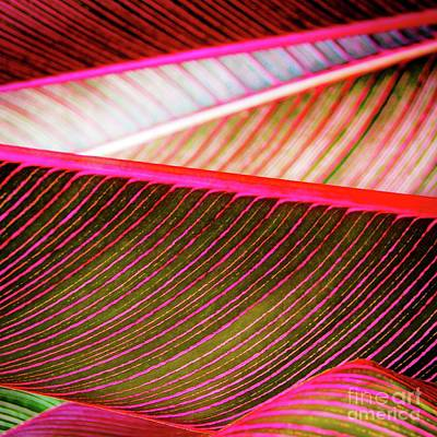 Photograph - Bright Leaves 548 by D Davila