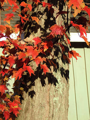 Photograph - Bright Leaves, Deep Shadows by Susan Lafleur