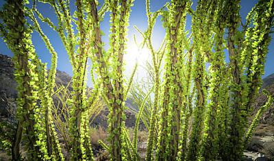 Photograph - Bright Light In The Desert by T Brian Jones