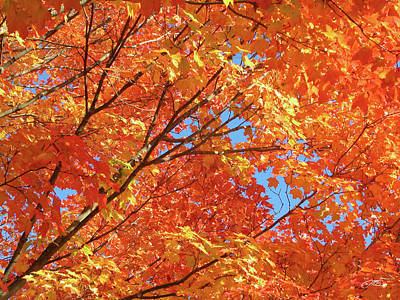 Photograph - Bright Orange Autumn Leaves by Mike M Burke