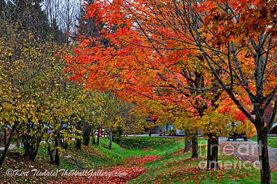 Digital Art - Bright Orange Fall Colors by Kirt Tisdale
