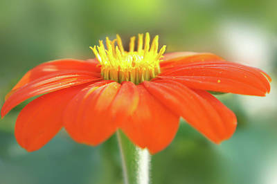Red Abstract Photograph - Bright Orange Flower by Art Spectrum