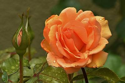 Roses In Bud Photograph - Bright Orange Rose And Bud by Linda Brody