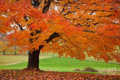 Fallen Leaf Photograph - Bright Pasture by Susan Cole Kelly