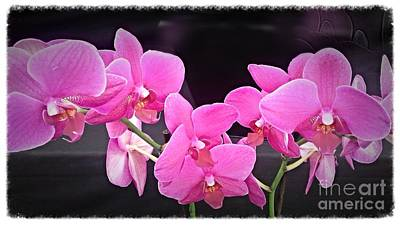 Photograph - Bright Pink Orchids by Joan-Violet Stretch