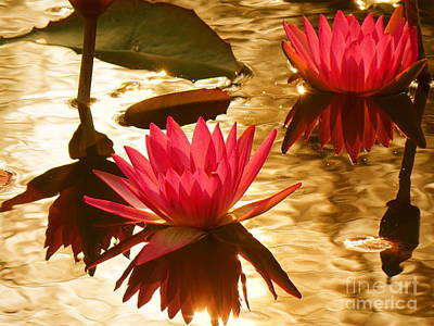 Photograph - Bright Purple Lotus Flower With Sun Reflecting by Yali Shi